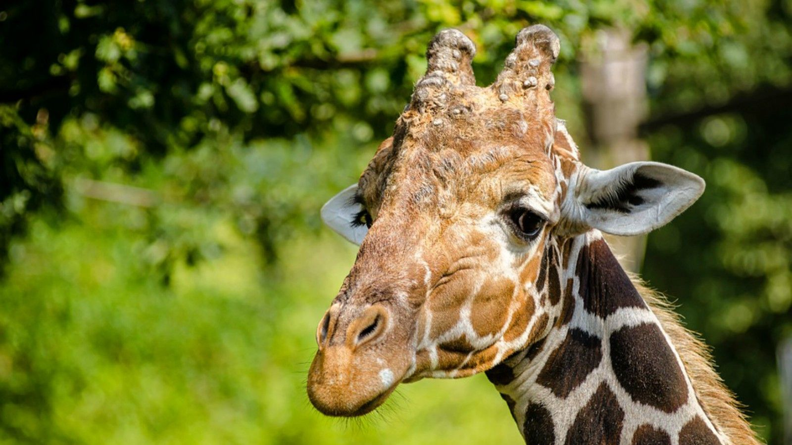 Things to do in Erie Pennsylvania - Zoo